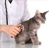 Ветеринарные клиники в Ванино